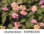 beautiful flower  | Shutterstock . vector #545983333
