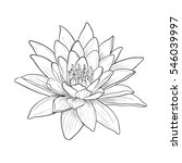 Floral Water Lily For Design ...