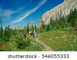 Man Hiking With Two Llamas Wit...