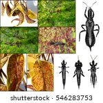 thrips  order thysanoptera  are ... | Shutterstock . vector #546283753