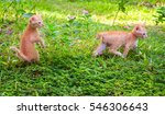 Stock photo small kittens playing in sunny garden first time outdoor cats orange kitties outside hunting in 546306643
