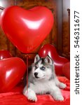 Valentine's Day Husky Puppy On...