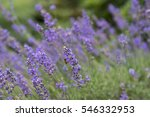summers day at national...   Shutterstock . vector #546332953