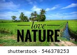 background of green rice fields ... | Shutterstock . vector #546378253