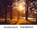 Pine Forest In The Evening At...