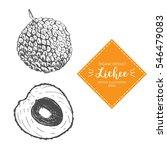 lychee vector illustration.... | Shutterstock .eps vector #546479083