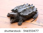 alligator snapping turtle  ... | Shutterstock . vector #546553477
