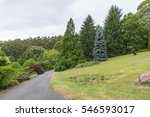 national rhododendron gardens...   Shutterstock . vector #546593017