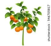 mandarin tree  citrus... | Shutterstock .eps vector #546705817