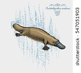 platypus duck billed engraved ... | Shutterstock .eps vector #547051903