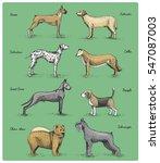 dog breeds engraved  hand drawn ... | Shutterstock .eps vector #547087003