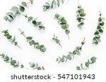 green leaves eucalyptus on... | Shutterstock . vector #547101943