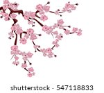 Japanese Cherry Tree. Spreadin...