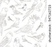 parrots set pattern. tropical... | Shutterstock . vector #547162723
