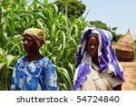 BURKINA FASO - AUGUST 9: Women of the Bissa ethnic, Bissa women cultivate millet and sorghum, August 9, 2009 in Country Bissa, Burkina Faso - stock photo