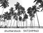 Coconut Trees At Tropical Beac...