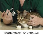 Small photo of Veterinarian prepares to administer medication to a calm tabby cat.