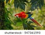 red parrot in green vegetation. ... | Shutterstock . vector #547361593