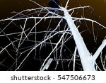 abstraction  white tree... | Shutterstock . vector #547506673