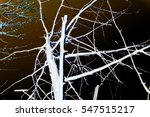 abstraction  white tree... | Shutterstock . vector #547515217