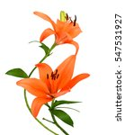lily flower isolated on white...   Shutterstock . vector #547531927
