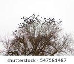 Black Crows On A Tree