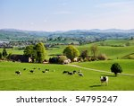 grazing cattle on an english... | Shutterstock . vector #54795247