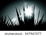 detail of the sword of blue...   Shutterstock . vector #547967377