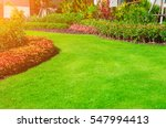 green lawn  the front lawn for... | Shutterstock . vector #547994413