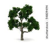 tree isolated on a white... | Shutterstock . vector #54809494
