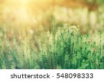 abstract natural sunny... | Shutterstock . vector #548098333