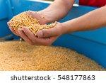 human hands holding soy beans | Shutterstock . vector #548177863