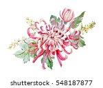 watercolor botanical... | Shutterstock . vector #548187877