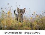 Stock photo young cat plays on meadow 548196997