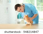 Stock photo veterinarian doctor checking cat at a vet clinic 548214847