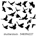 silhouette flocks of flying... | Shutterstock .eps vector #548396227