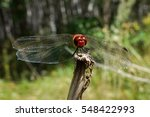 The Photo Shows A Dragonfly On...