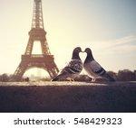 lovebird silhouette on blurred... | Shutterstock . vector #548429323