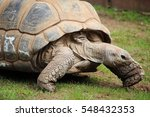 galapagos tortoise | Shutterstock . vector #548432353