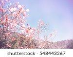 Background Nature Flower...