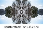 Abstract Pattern Of Trees...