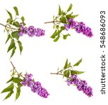 Stock photo flowering branch of lilac isolated on white background set 548686093