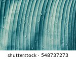 details of banana leaf ... | Shutterstock . vector #548737273
