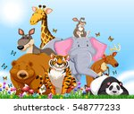 Many Types Of Wild Animals In...