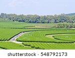 tea farm groove. | Shutterstock . vector #548792173