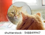 Reflection Of The Red Cat ...