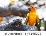 Colorful Yellow Parrot  Sun...