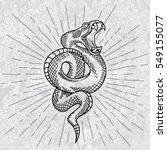 Viper Snake. Hand Drawn...