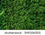 green bush wall | Shutterstock . vector #549206503