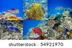 indian ocean.  fishes in corals | Shutterstock . vector #54921970